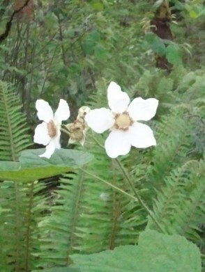 Star shaped flower