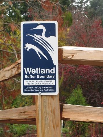 ... to wetland