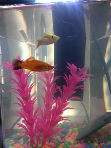 Belle and Aurora