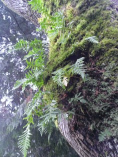 Moss and ferns on a tree trunk (not the ones that got my legs all wet ;o)