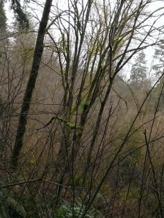 Leafless woods