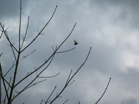 This bird started flying (and it looks like also relieving itself) right when I shot the picture