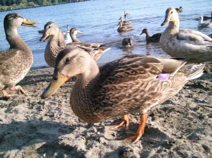 Hi Duckie!