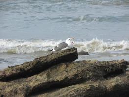 Seagull taking a break