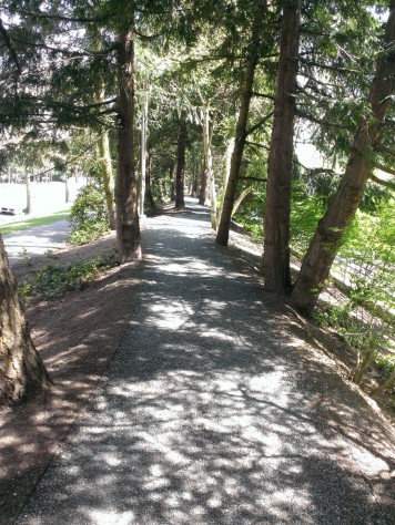 Along side the road, a gravel trail that leads to the woody part