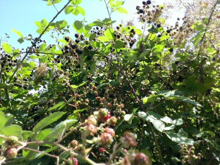 Berry paradise