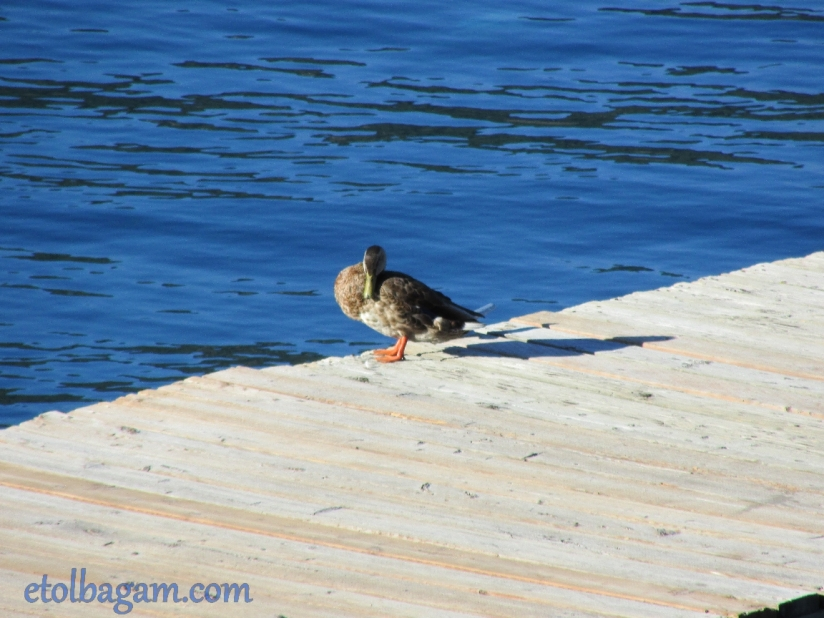 DuckBath_01