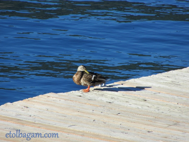 DuckBath_03