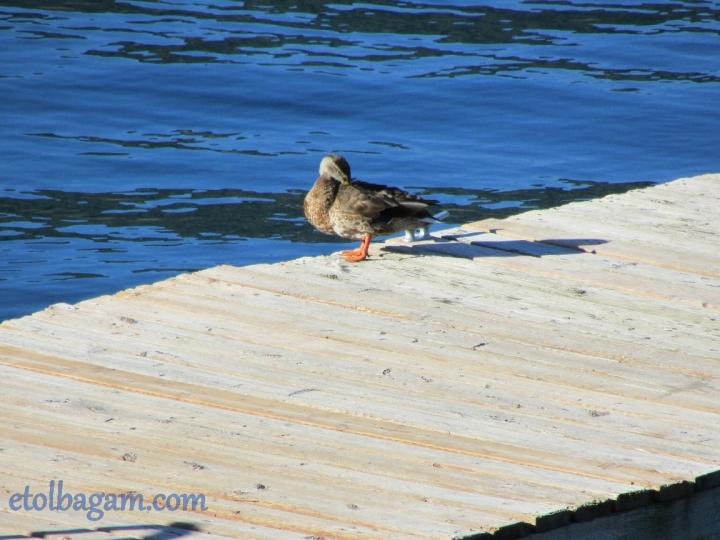 DuckBath_04