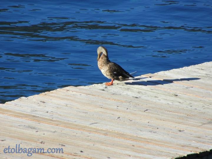 DuckBath_05