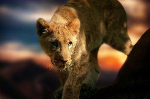 lionandme